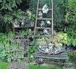 Abgesägten Baumstamm Dekorieren Neu Dekoration Hauswurz Wachst Im Baumstamm Gartenidee