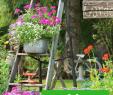 Alte Holzleiter Im Garten Dekorieren Elegant Mit Einer Blumentreppe Aus Holz Oder Metall Können Sie