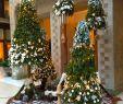 Außendeko Elegant Heine Home Led Deko Stern Weihnachten Deko Weihnachten
