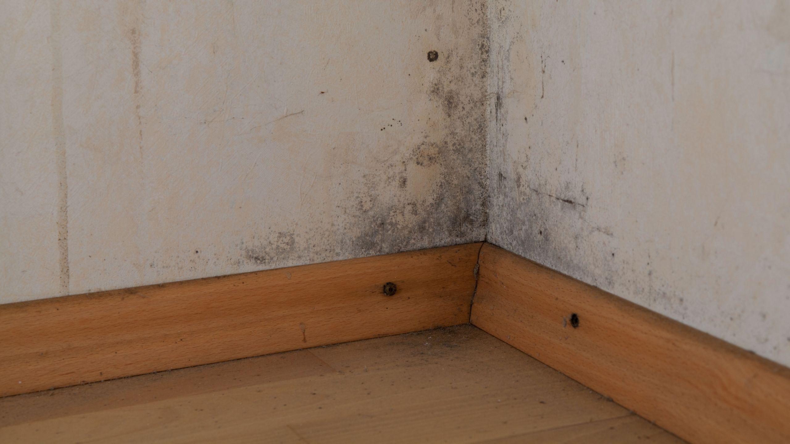 schimmelproblematik antischimmellufter schimmelvorsorge tote ecke wohnzimmer tote ecke wohnzimmer