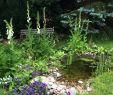 Bachlauf Im Garten Inspirierend Die 218 Besten Bilder Von Gartenteich In 2019