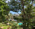 Bachlauf Im Garten Luxus Papillon Lagoon Reef Bewertungen Fotos & Preisvergleich