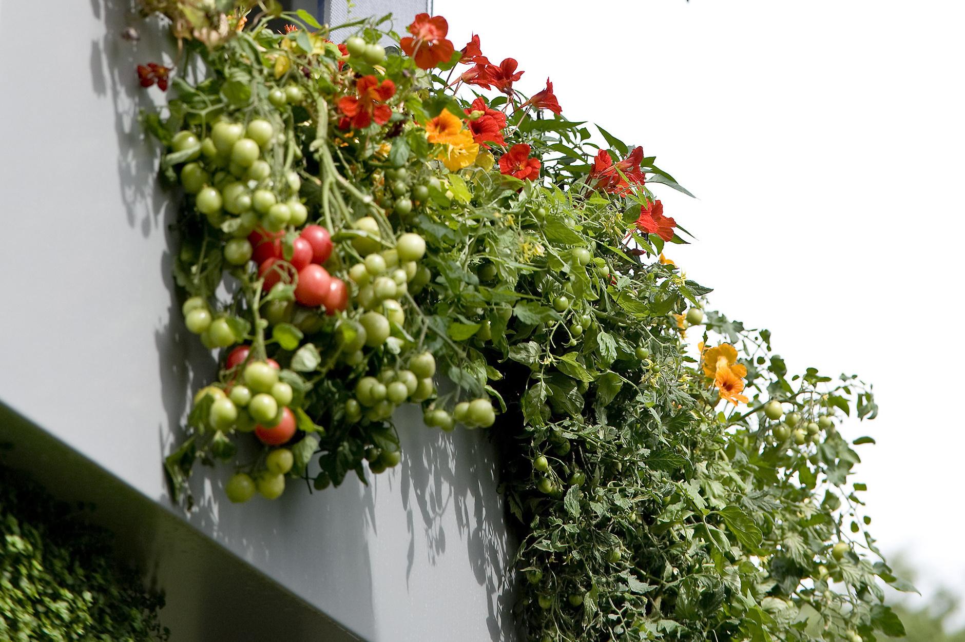 Balkon Deko Genial Растения на баРконе правиРа выживания