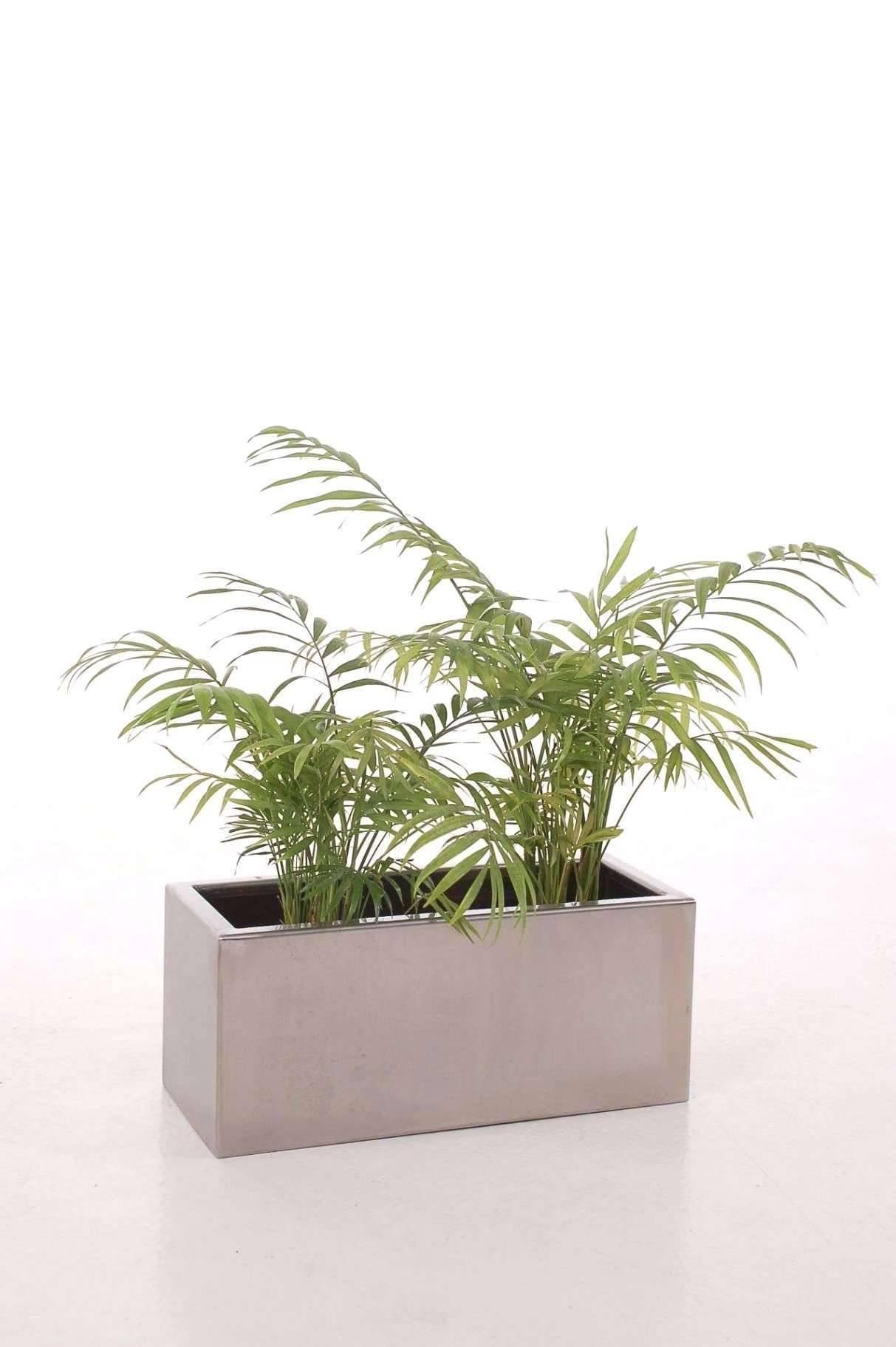 pflanzen wohnzimmer modern luxury pflanzen deko ideen of pflanzen wohnzimmer modern