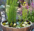 Balkon Ideen Elegant Diy Mini Teich Im topf Und Noch Viele tolle Gartenideen Für