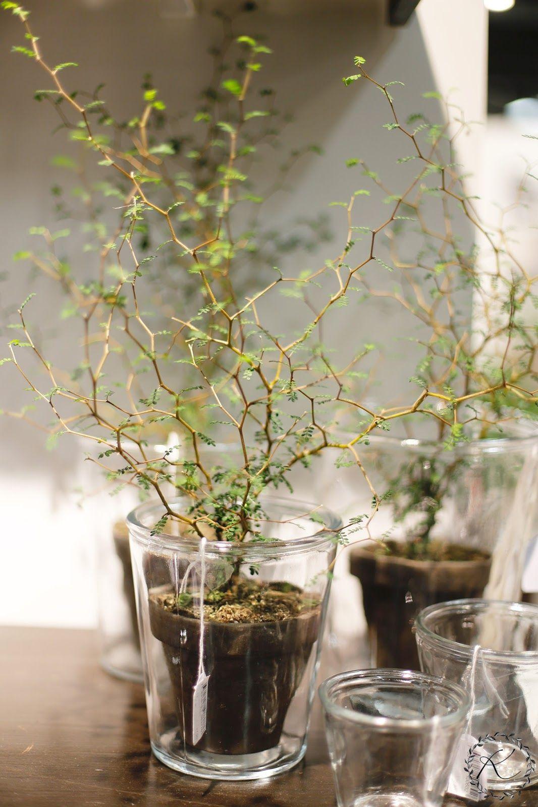 Balkongarten Best Of formexin Satoa 2 2 Habitarelippuarvonta