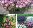 Balkongarten Genial top 10 Wonderful Plants for Small Containers