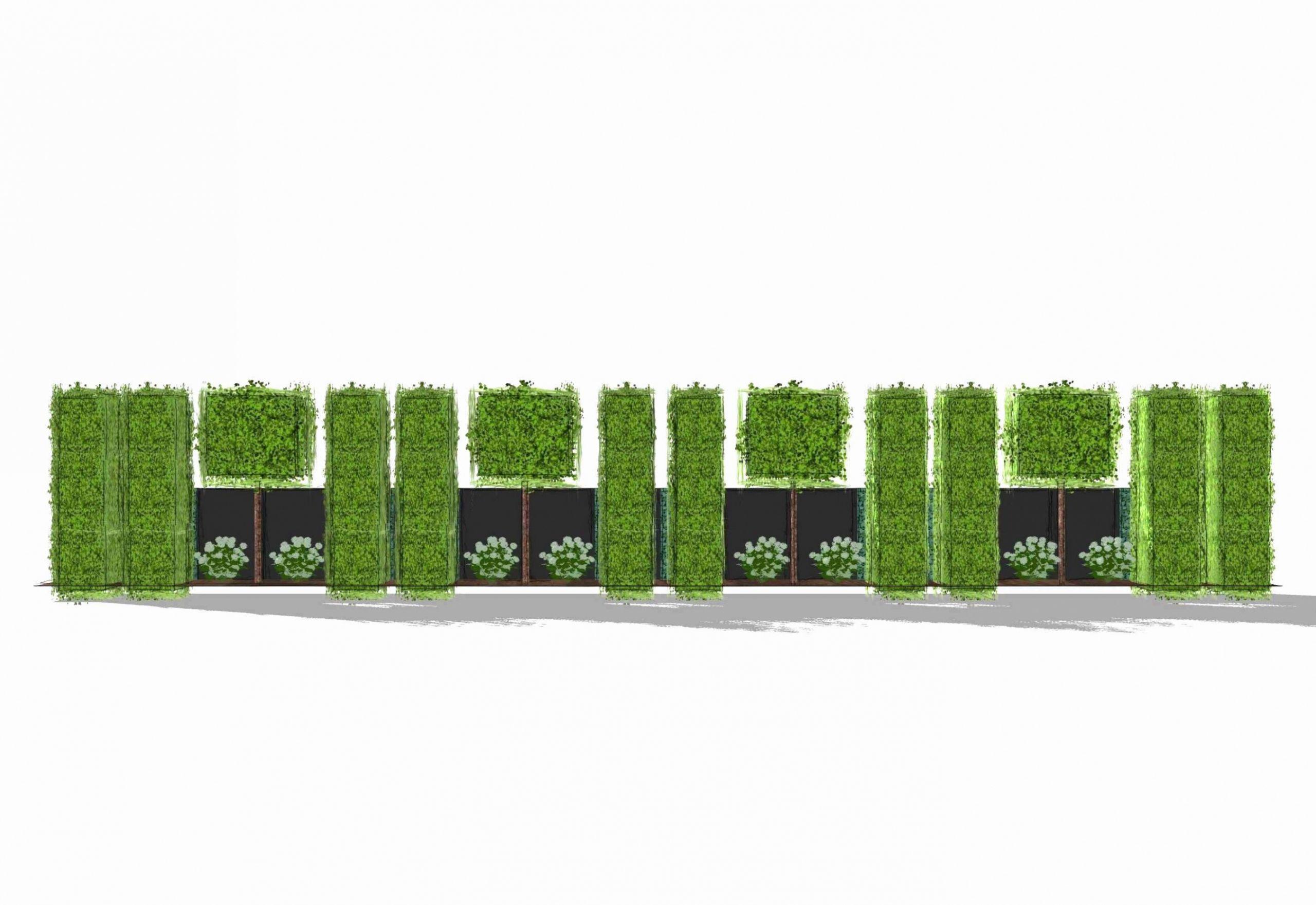 42 luxus bambus fur garten stock winterharte kubelpflanzen als sichtschutz winterharte kubelpflanzen als sichtschutz