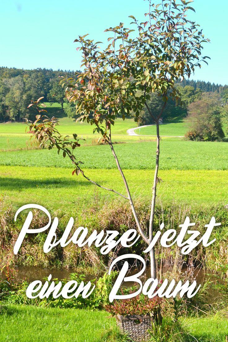 Baum Deko Garten Inspirierend Baum Popular Pinterest