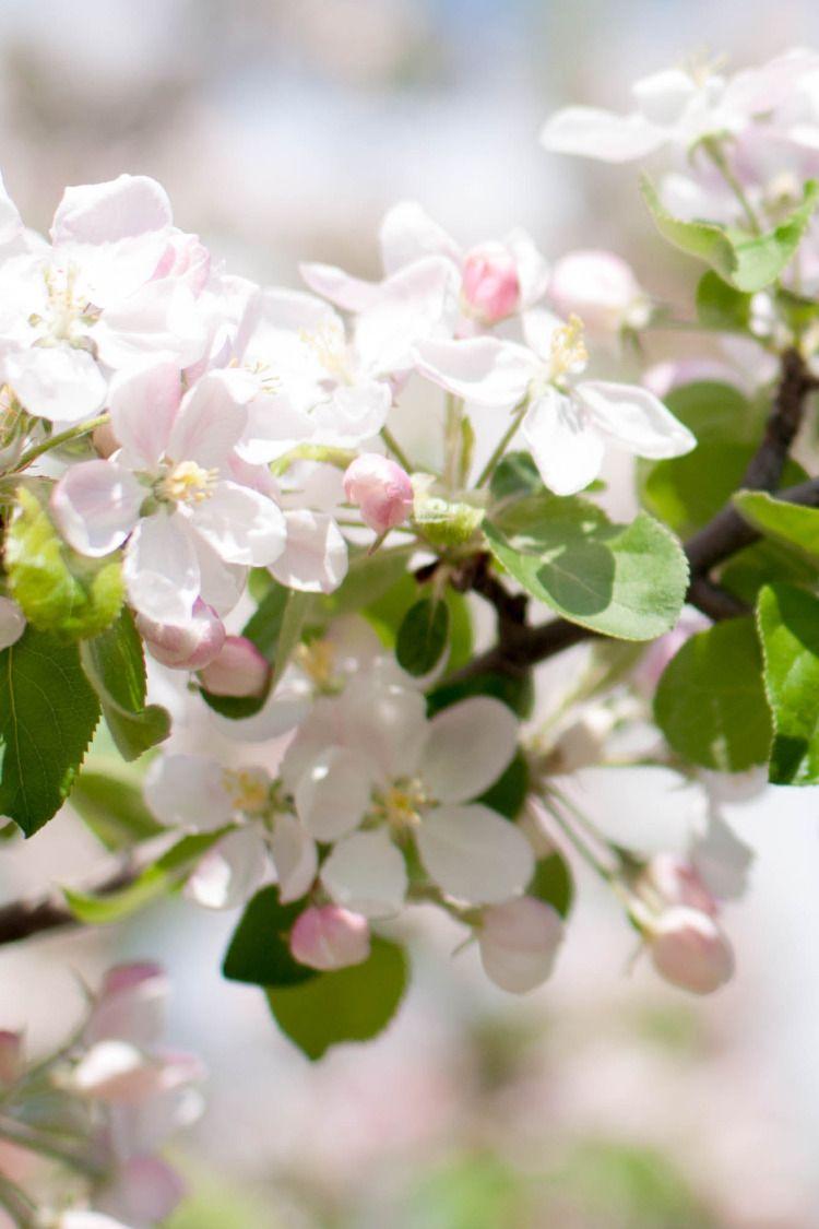 Baum Deko Garten Schön Garten Die Schönsten Blühenden Bäume Für Den Frühling
