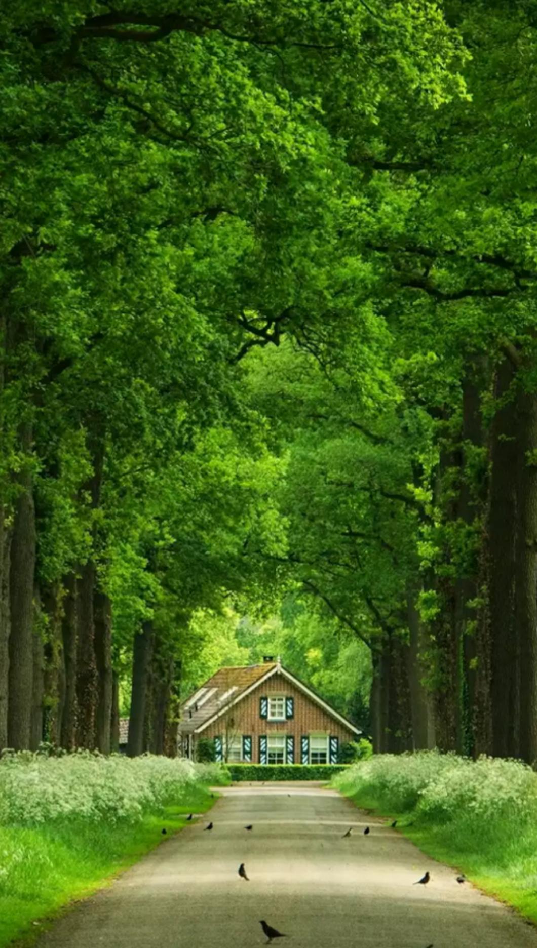 Baum Garten Best Of Nature S Loverï ¿ King Google Google
