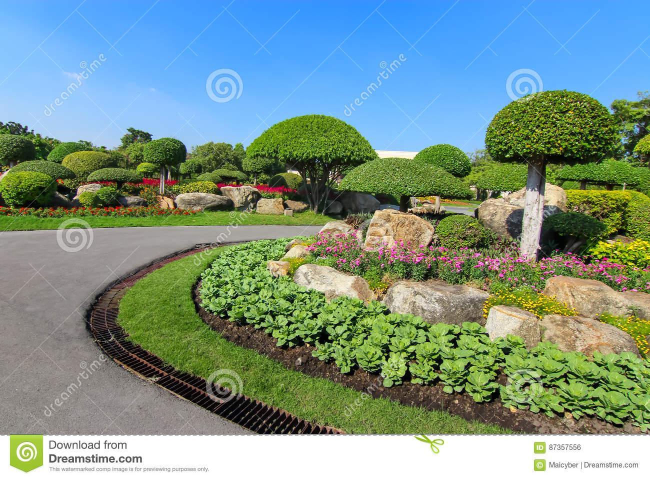 Baum Garten Frisch Schöner Zwergartiger Baum Im Garten Stockfoto Bild Von
