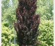Baum Garten Schön Pin by Brid Correia On Trees