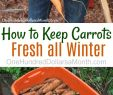 Beet Deko Frisch How to Keep Carrots Potatoes and Beets Fresh All Winter