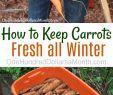 Beet Deko Frisch How to Keep Carrots Potatoes and Beets Fresh All Winter