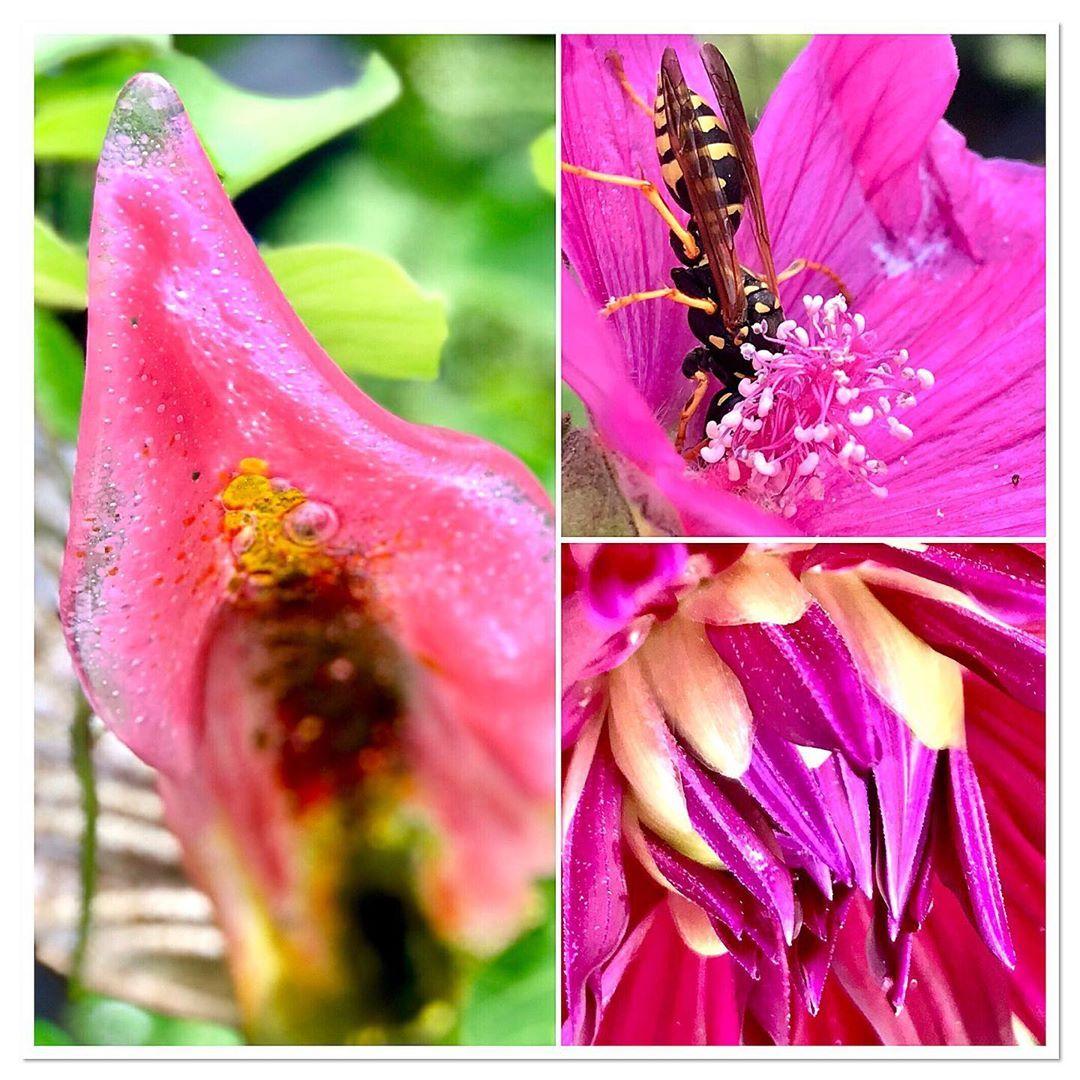 Beet Deko Genial Grüße Aus Dem Heimischen Garten Garten Gärtnern Hobby