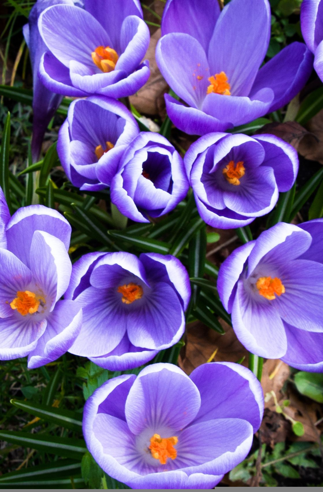 Beetbepflanzung Ideen Best Of Crocuses