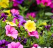 Beetbepflanzung Ideen Luxus Pinterest