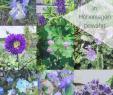 Beetgestaltung Modern Genial 9 & Mehr Blaue Stauden – Blaues Wunder Im Garten Auf 850 Hm