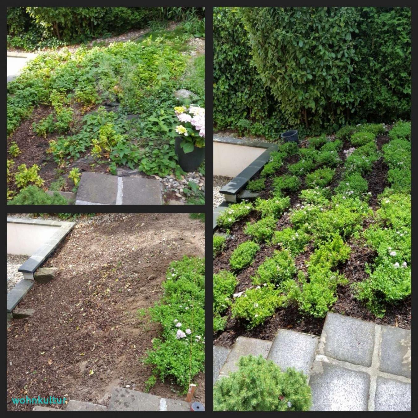 Beetgestaltung Modern Schön Gartengestaltung Ideen Mit Steinen — Temobardz Home Blog