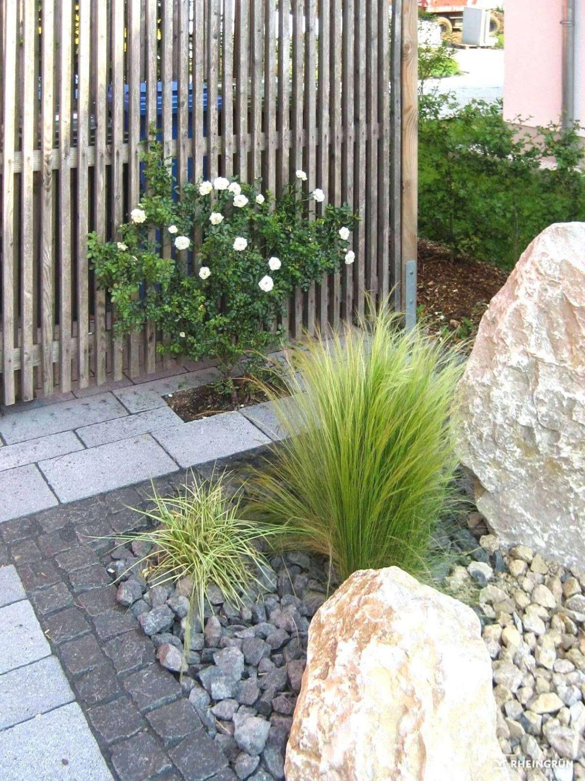 Bepflanzung Garten Elegant Garten Sichtschutz Pflanzen — Temobardz Home Blog