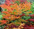 Bepflanzung Garten Genial Pin Von Gerlinde Brieschke Auf Pflanzen