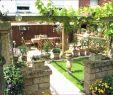 Bepflanzung Garten Neu 93 Einzigartig Steinmauer Im Garten