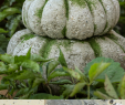 Beton Diy Elegant Diy Concrete Pumpkin Idea for Fall