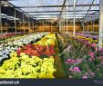 Bilder Garten Schön My Garden Flower My Garden Od Stock Edit now