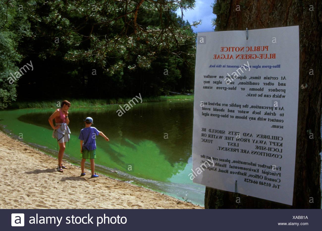 algae in water of loch garten so no one can swim highlands scotland XAB81A