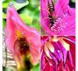 Blech Deko Garten Frisch Grüße Aus Dem Heimischen Garten Garten Gärtnern Hobby