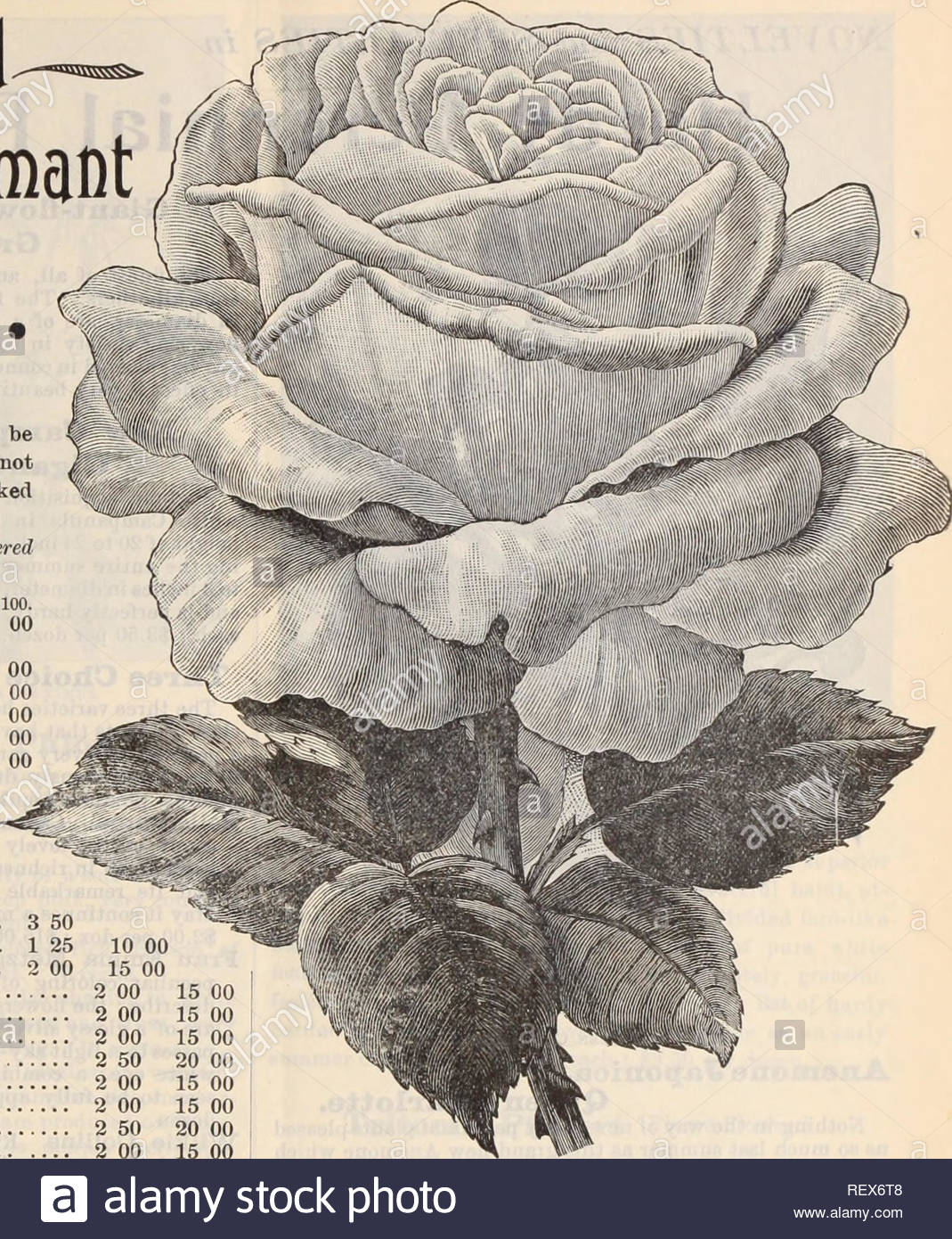 dreers wholesale price list henry a dreer nursery catalogue wholesale price list 3t tuio yeaf old dormant per 100 20 00 15 00 15 go 15 00 15 00 15 00 12 00 10 00 12 00 12 00 20 00 roses varieties marked with an can be supplied in own root plants those not marked are dwarf budded plants worked on manetti pricesnoted are only for orders delivered before april 1st per doz augustine guinoseaux 2 50 american beauty 3 00 alfred colomb 2 00 anna de sbach 2 00 boule de neige 2 00 baroness rothschild 2 00 baron de bonstettin 2 00 blanche moreau 1 50 baltimo REX6T8