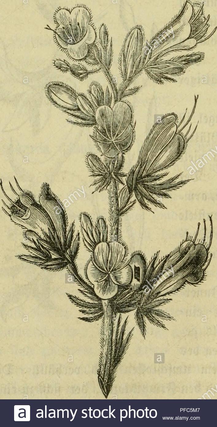Blumen Für Den Garten Neu N 53 Stock S & N 53 Stock Page 35 Alamy