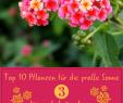 Blumenbeet Gestalten Best Of Pflanzen Für Pralle sonne Die top 10 Für Garten