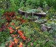 Blumenbeet Gestalten Inspirierend Gartengestaltung Tipps 😍 Gartengestaltung Tipps Tricks