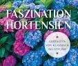 Blumenbeet Gestalten Luxus Faszination Hortensien