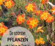 Blumenbeet Gestalten Neu Pflanzen – Garden Decor