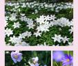 Blumengarten Anlegen Einzigartig Anemonen In Vase Und Garten Buschwindröschen Und Ihre