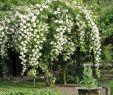 Blumengarten Anlegen Schön Landhausgarten Rosen ❤️❤️❤️