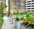 Brigitte Hachenburg Garten Elegant Deko Für Große Fenster — Temobardz Home Blog