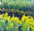 Coole Gartenideen Einzigartig Tagged with Shrubs On Instagram