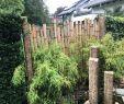 Cortenstahl Garten Online Bestellen Schön Sichtschutz Für Den Garten Aus Bambus Kombiniert Mit