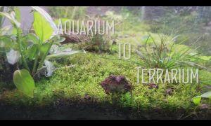 30 Einzigartig Deko Frosch Für Den Garten