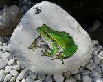 30 Schön Deko Frosch Garten