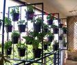 Deko Garten Selber Machen Genial 39 Frisch Vertikaler Garten Selber Machen Luxus