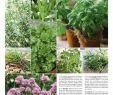 Deko Glaskugeln Für Den Garten Genial Rote Wand Weiß Streichen — Temobardz Home Blog