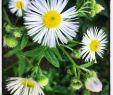 Deko Hauseingang sommer Neu Natur Popular Pinterest