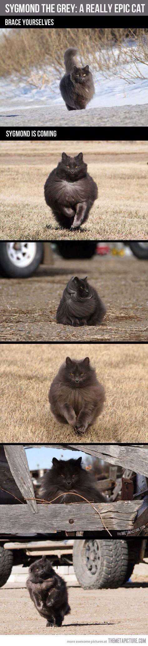 ce4fc f67cd2d8ed23c2849fdf33 fluffy cat kitty cats