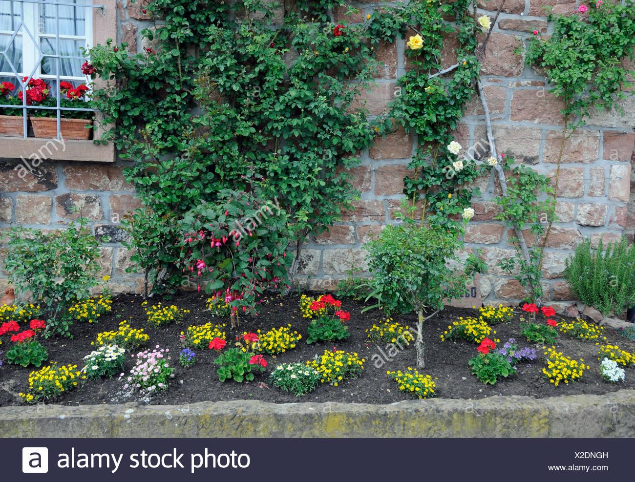 blumenrabatte rabatte blumen zierpflanzen garten park blumenbeet stadtmauer mauer eberbach frhling frhjahr X2DNGH