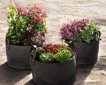 34 Frisch Deko Pflanzen Groß